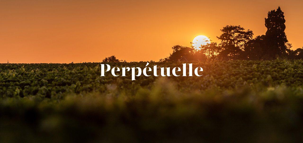Perpetuelle - Création d'identité de Champagne